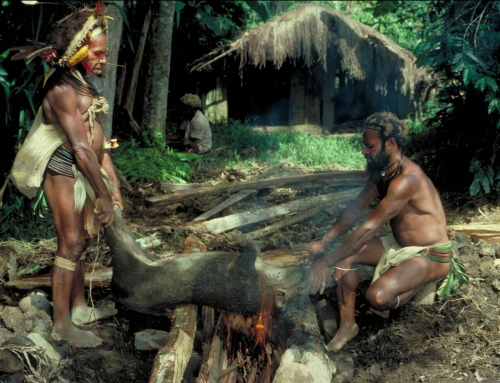Cooking a pig – PNG