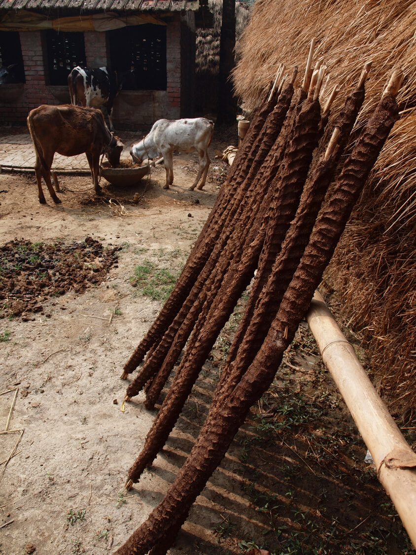 Cow dung as antiseptic – India (West Bengal)
